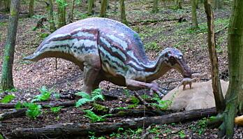 """Maiasaura var en planteetende nebbdinosaur. Navnet betyr """"God mor reptil"""". Den ble oppdaget i 1978 og fikk navnet fordi funnet var det første beviset på at noen dinosaurer tok vare på sine små etter de var klekket."""