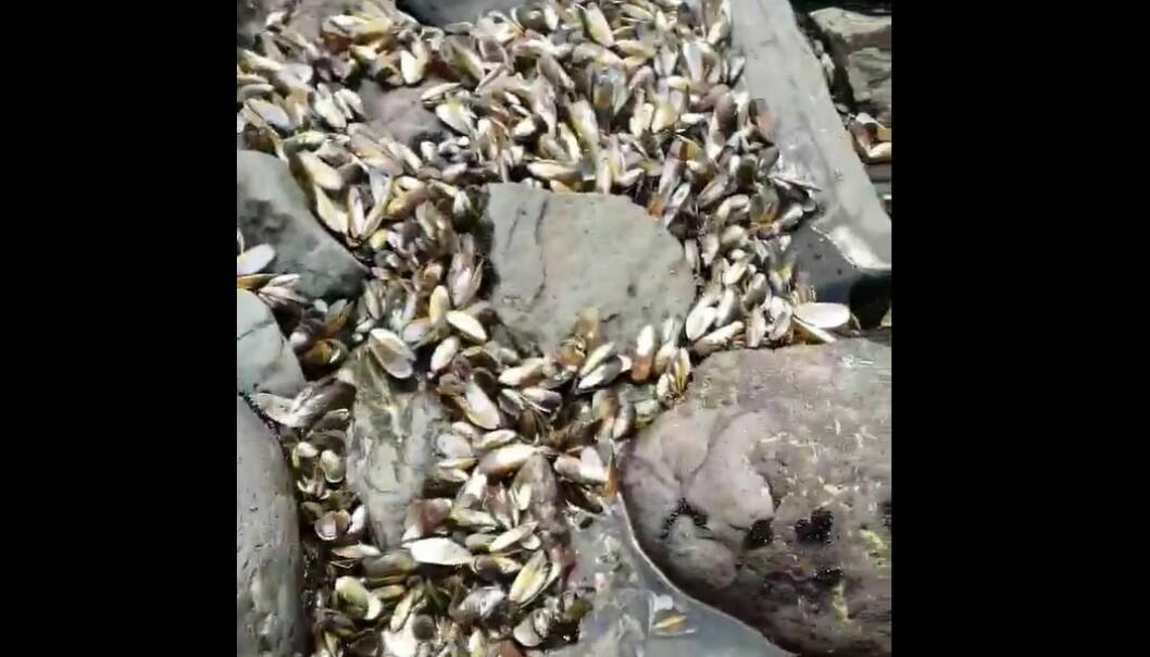 En innbygger i New Zealand filmet det han så da høyvannet trakk seg tilbake.