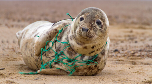 Lyd kan redde sjøpattedyr fra fiskegarn