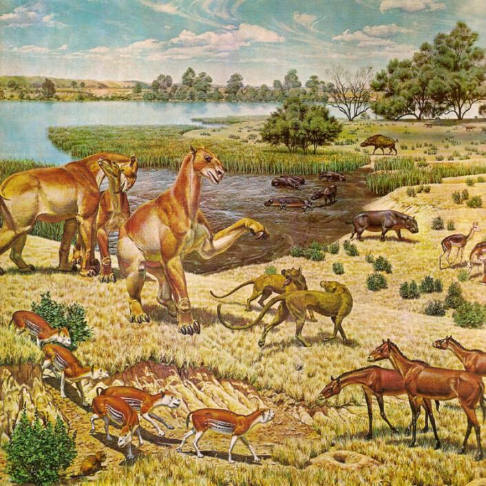Dyrelivet i Miocen i Nord-Amerika. (Foto: (Illustrasjon: Jay Matternes, Wikimedia Commons))
