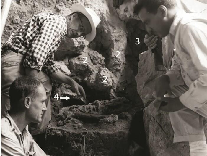 Her ser du utgravningene foretatt av Ralph Solecki (fremst til venstre) i 1960 i hulen.