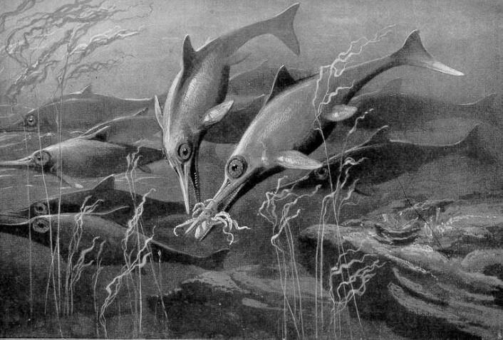 Slik har en kunstner sett for seg havøglene som levde for flere hundre millioner år siden. Legg merke til den delfin-lignende kroppen, selv om de ikke er i slekt med hverandre.  (Bilde: Heinrich Harder/Wikimedia Commons)