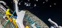 Skal forske på etisk fiske