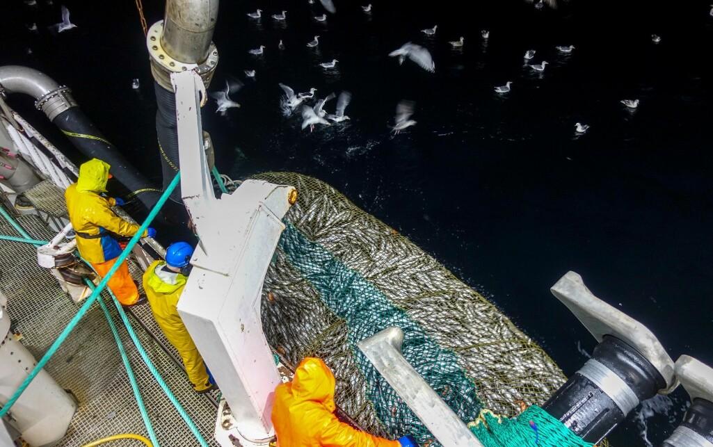 EthiCatch er et forskningsprosjekt om fiskevelferd, kvalitet, etikk og verdiskaping i kystfiskeriene.