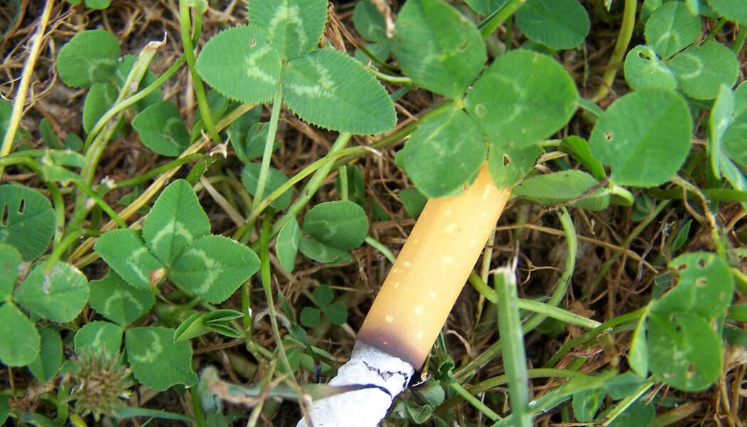 Mange røykere tenker nok ikke på at de kaster plast når de stumper røyken i naturen, tror forsker.