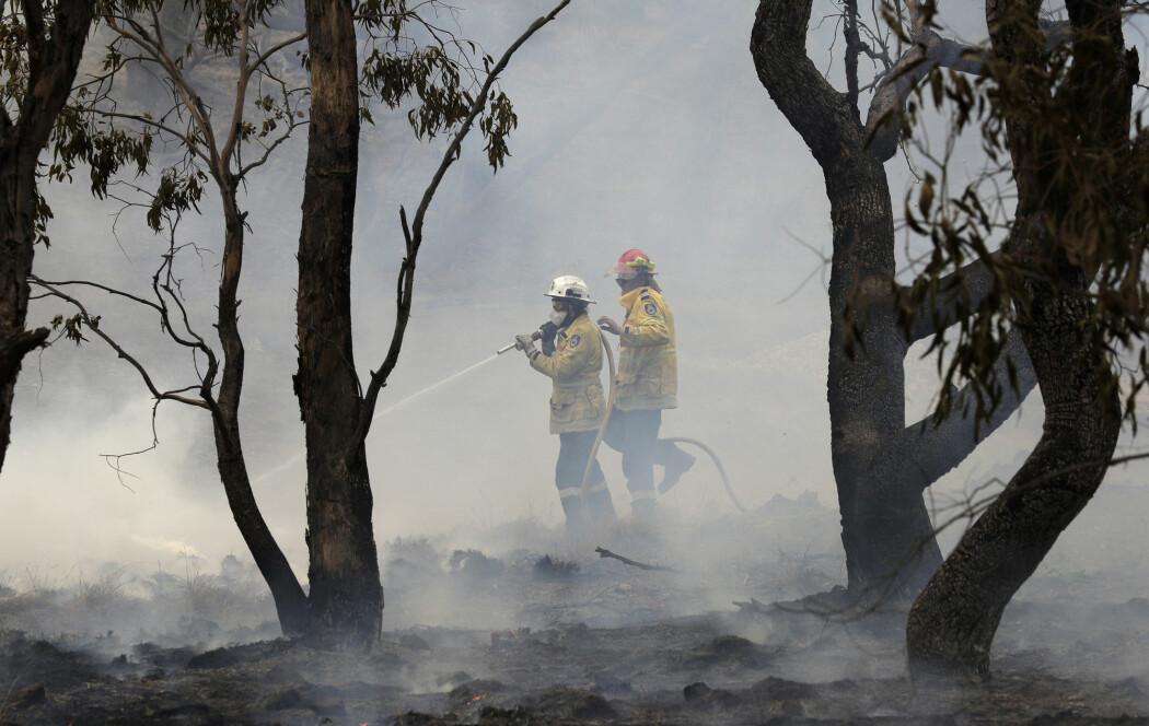 Så mye som 21 prosent av Australias skogområder har gått tapt under årets sesong, viser en ny studie. Her fra brannslukking sør for hovedstaden Canberra i begynnelsen av februar.