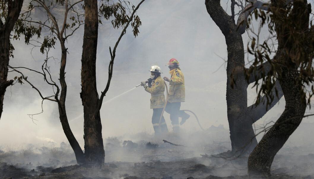 Brannene ødela en femdel av Australias skog