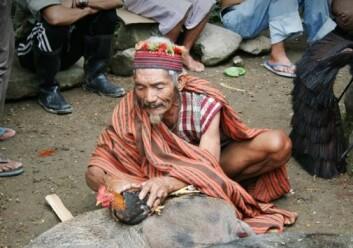 Rituell ekspert blant ifugao som utfører et ofringsrituale. (Foto: Jon Henrik Remme)