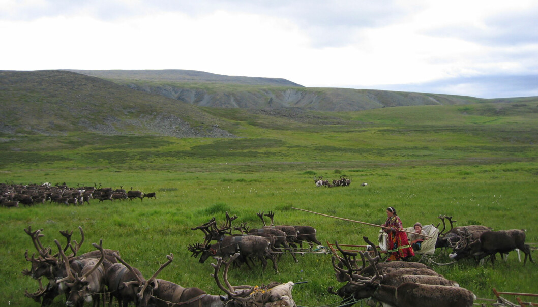 """Nenetsere er urbefolkningen i Polar-Ural i Nord Russland."""
