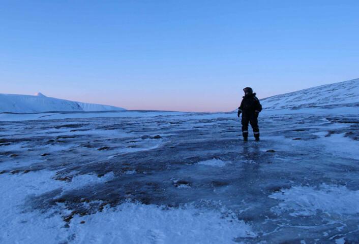 Islagt vinterlandskap på Svalbard. Når vegetasjonen er dekket av is gir det dårlig beite for svalbardreinen. (Foto: Vebjørn Veiberg)