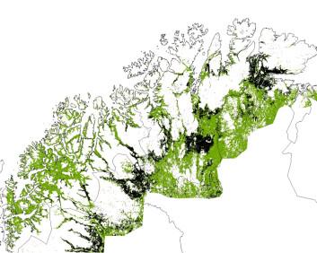 Dette bildet viser hvordan om lag en tredel av bjørkeskogsbeltet ble angrepet. Rundt 10 000 kvadratkilometer skog (svart) ble spist av lauvmakken. Grønne områder fikk liten eller ingen skade. (Foto: (Kart fra forskningsprosjektet))