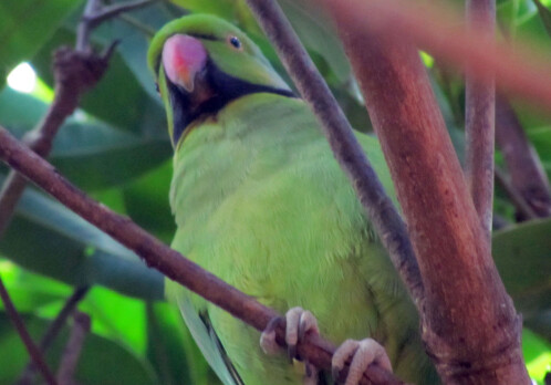 Bird species disappear much faster than previously thought, but conservation helps