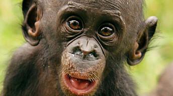 Aper bygger nettverk med deling