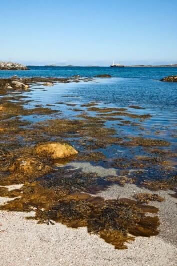 Havet byr på store uutnyttede ressurser. (Illustrasjonsfoto: Photos.com)