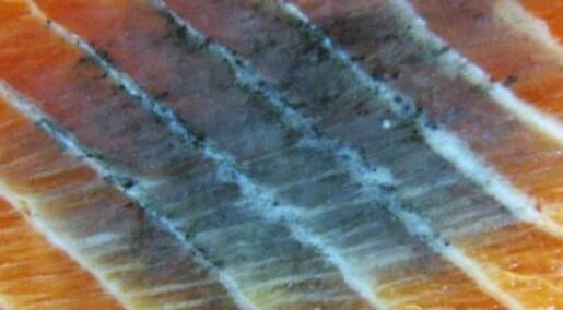 Laksen reparerer på seg svarte flekker