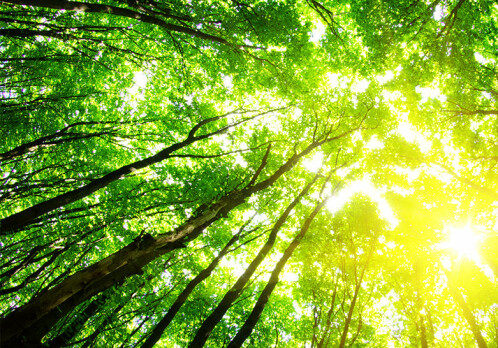 A shift from cropland to forests made Western Europe cooler