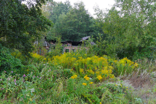 It doesn't take long before shrubs and trees move into an abandoned farm.