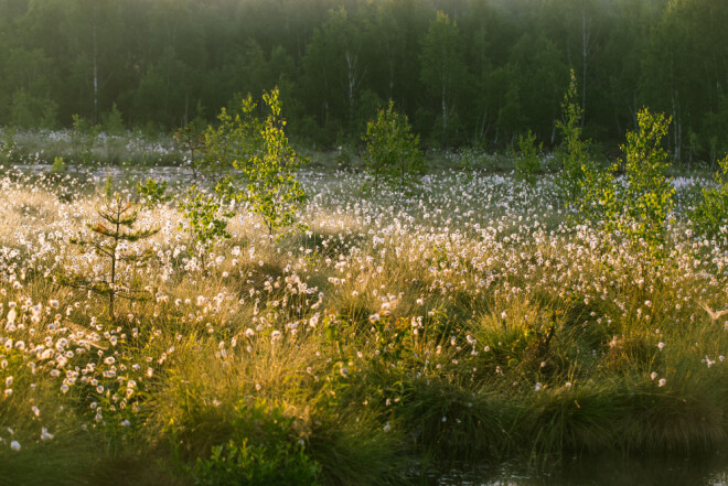 This wetland in Latvia shows illustrates how trees are invading these areas because they are drying out.