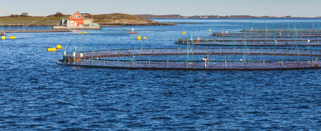 En enklere metode for å se hvordan det står til med dyrene som lever under oppdrettsanlegg, kan gi bedre levemiljø for fisken og de andre dyrene under og rundt anleggene.