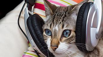Koselyder og lyse toner gjør kattemusikk beroligende