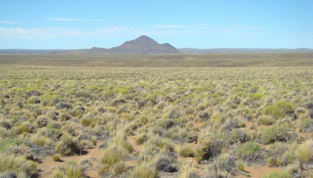 Forskerne har sammenlignet naturen i mange forskjellige tørre områder for å finne ut hvordan økosystemer vil svare på varmere og tørrere forhold. Her er et bilde fra argentinsk Patagonia, et av områdene som ble undersøkt.