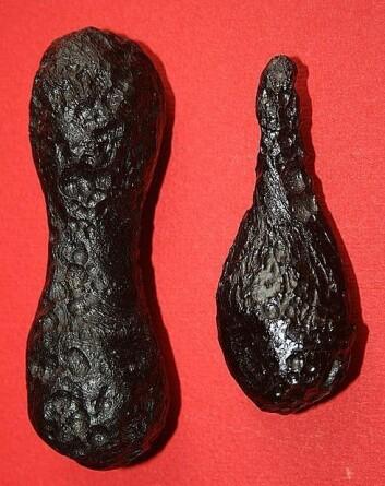 De dråpeformede tektittene lages når asteroider eller kometer smelter opp på veien gjennom vår atmosfære. (Foto: Brocken Inaglory/Wikimedia Creative Commons)
