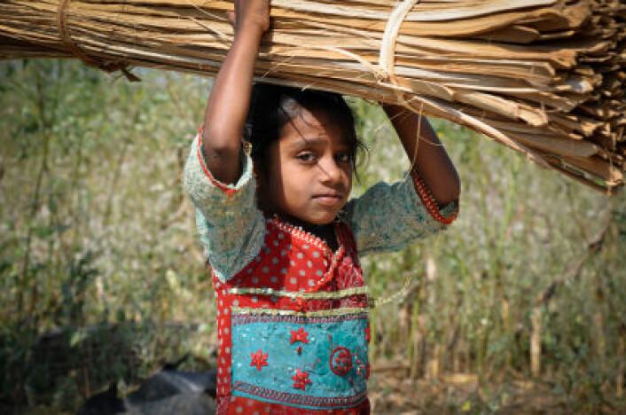 Det er gjort store framskritt i arbeidet mot barnearbeid, viser ny FN-rapport. I mange land er barnearbeid likevel fortsatt vanlig, ikke minst i landbruket. Bildet er fra India. (Foto: iStockphoto)