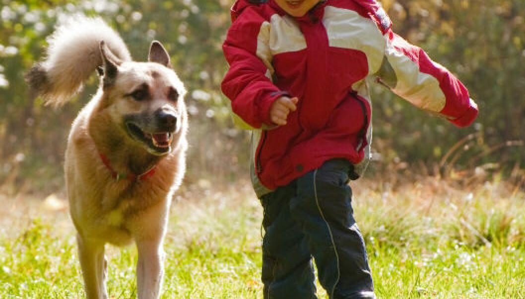 Bikkjebakterier kan beskytte mot astma