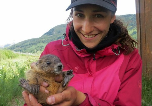 Older marmot-mothers produce more successful daughters