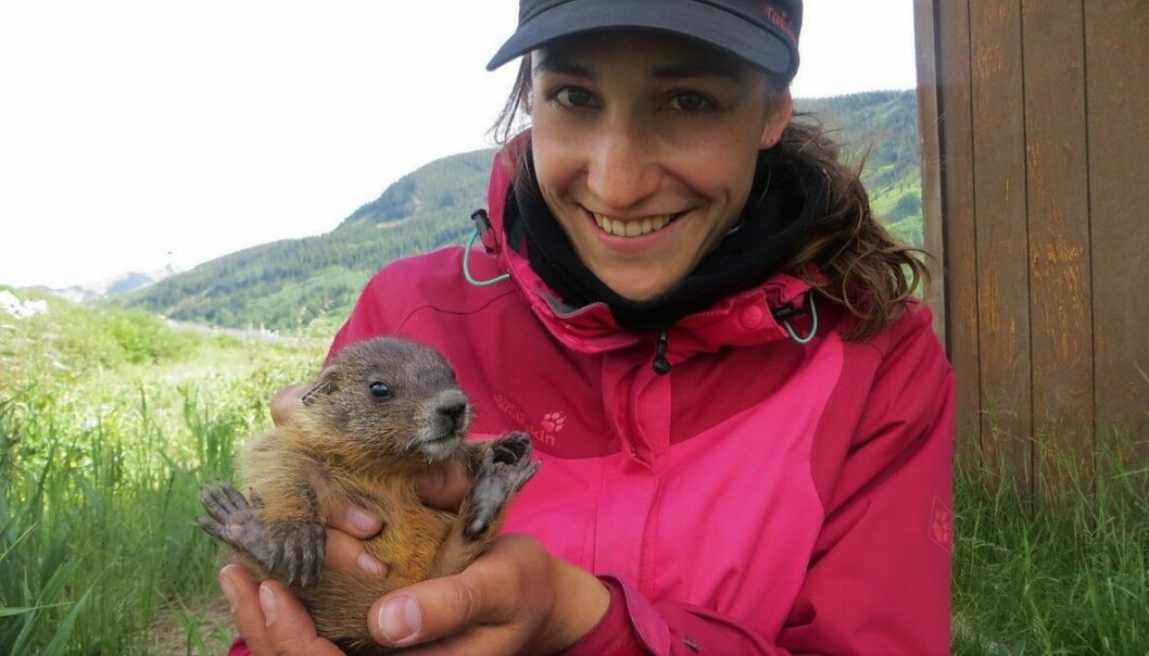Svenja B. Kroeger holding a yellow-bellied marmot pup.