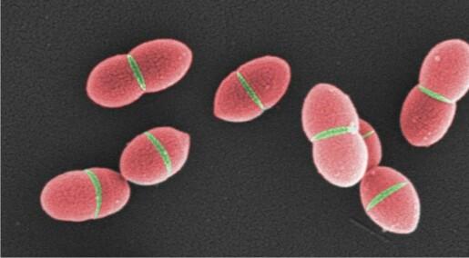 Gjennombrudd i forståelsen av bakteriell celledeling