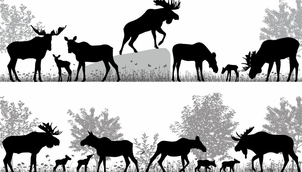 Det er vanskelig å beregne hvor mange rødrever, tigre, elger og så videre som finnes i naturen. Men nå kommer en ny og mer presis metode.