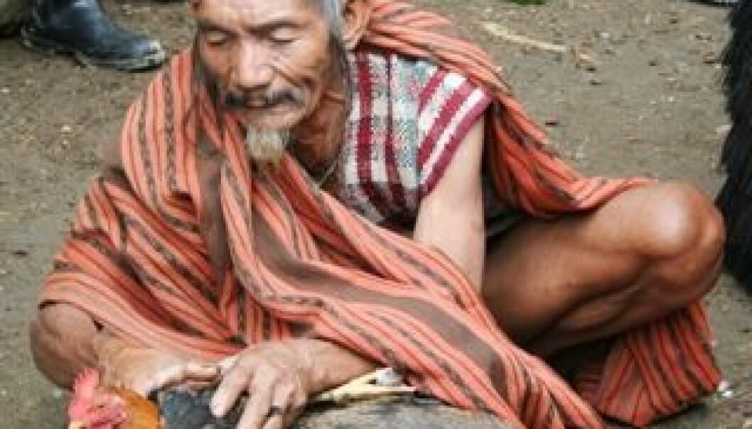 Rituell ekspert blant ifugao som utfører et ofringsrituale. Jon Henrik Remme