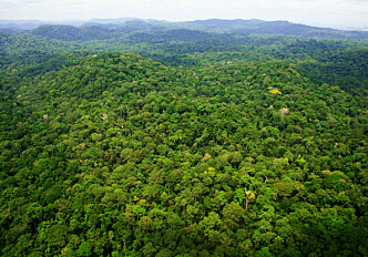 Followed 300 000 trees for 30 years: Tropical forests will soon be emitting more carbon than they capture