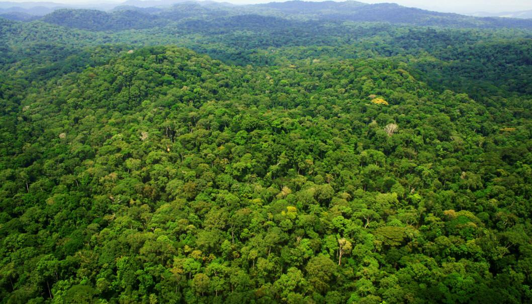 Above Ivindo National Park, central Gabon.