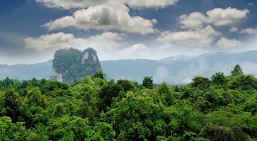 Tropiske skoger vil snart slippe ut mer karbon enn de fanger opp
