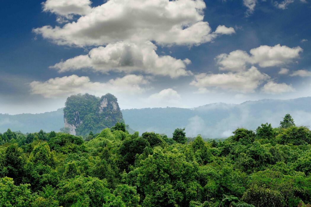 Fulgte 300 000 trær i 30 år: Skogene i Afrika og Amazonas kan slutte å holde på karbonet og begynne å avgi det til atmosfæren.