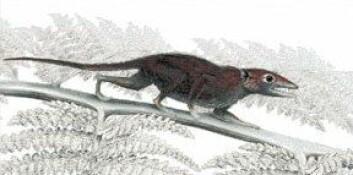Juramaia sinensis (Illustrasjon: Mark A. Klinger/Carnegie Museum of Natural History)