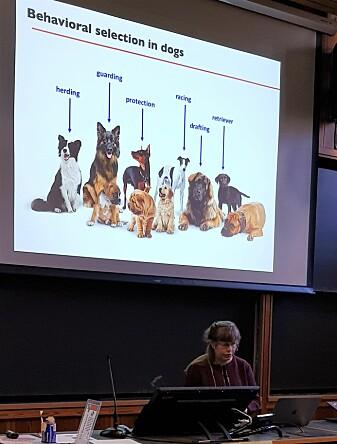 Kerstin Lindblad-Toh holder foredrag på Darwindagen ved Universitetet i Oslo 12. februar 2020.