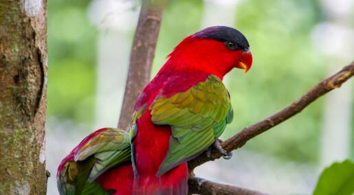 Skal vurdere risiko ved kjøp og salg av utrydningstruede papegøyer