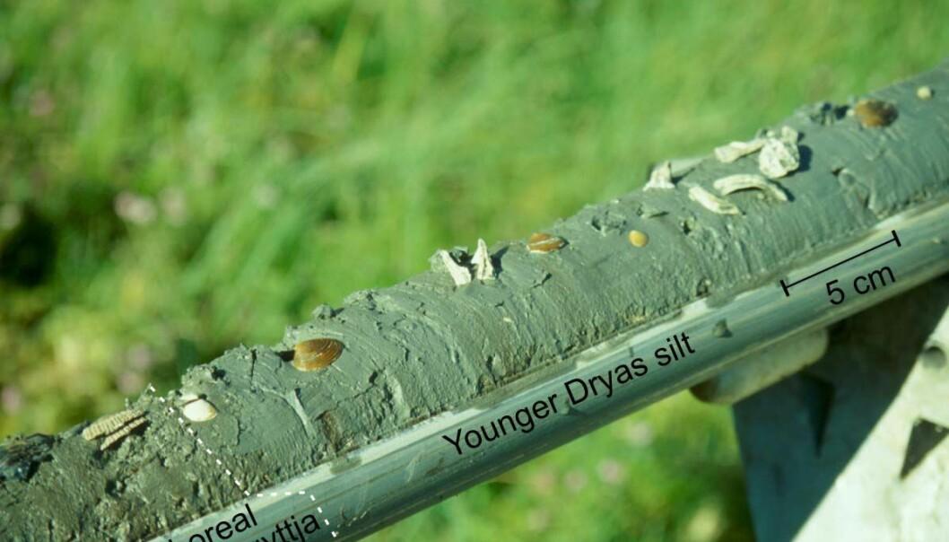 """""""En sedimentprøve fra Vestlandet. Den inneholder planterester som er blåst på havet og marine skjell. Prøven viser også to ulike tidsperioder, yngre Dryas hvor klimaet var kaldt og den etterfølgende varmeperioden Preboreal. """""""