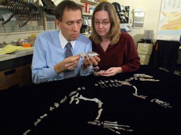 """Professor Hans Thewissen og doktorgradsstudent Lisa Noelle Cooper studerer hvalens forfar."""