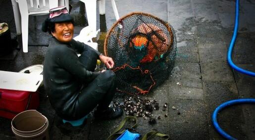 Så mye fisker kvinnene i verden