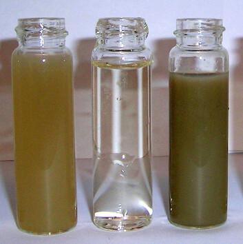 Glasset til høyre viser hvor mye partikler det kan være i avrenningen når man pløyer og sår høsthvete. De to andre prøvene viser avrenning ved høstharving med høstkorn (til venstre) og avrenning ved direktesåing av høstkorn (i midten). (Foto: Bioforsk)