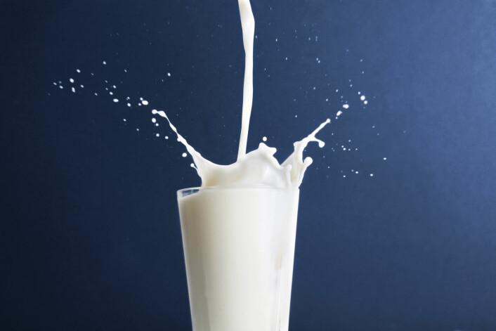 Økologisk melk, det er fett. Riktig fett, til og med, ifølge en ny undersøkelse. (Foto: Colourbox)