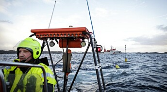 Her skyt forskarane med luftkanonar på gytande torsk