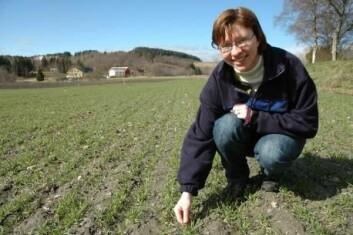 Anne Kari Bergjord ved Bioforsk Midt-Norge leder prosjektet med bruk av husdyrgjødsel i korn. (Foto: Jon Schärer)