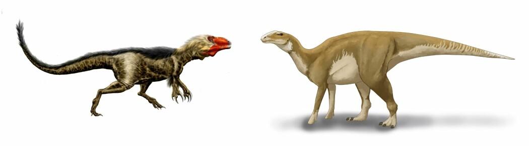 Det første bildet viser den kjøttetende dinosauren slik man i dag tror den så ut. Det andre bildet viser en ny tegning av nebbdinosauren.