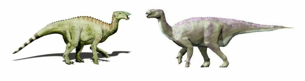 Iguanodon var en planteeter som kunne stå på både to og fire bein.