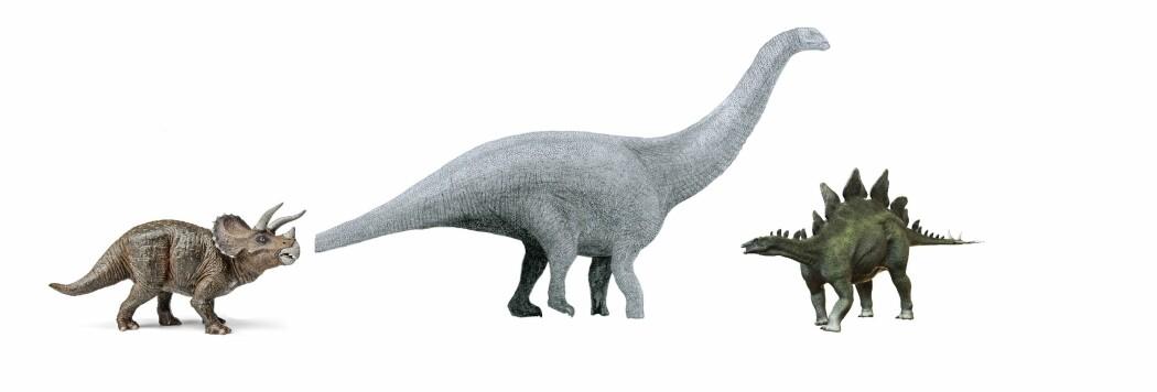 Cope og Marsh oppdaget Triceratops, med horn og stor beinkam rundt hodet, Brontosaurus, en stor langhals, og planteeteren med tagger på ryggen, Stegosaurus.